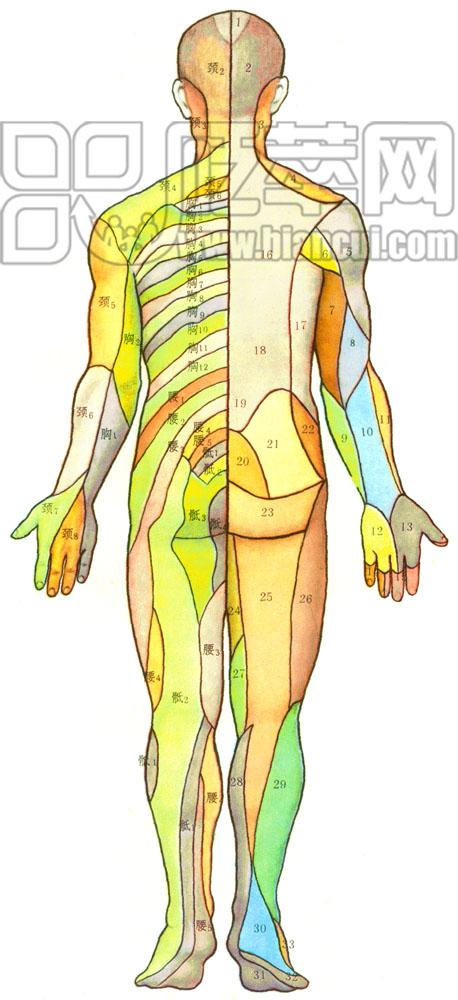 右下腹部位置图解